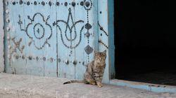 Journée internationale du chat: Les plus belles photos de vos petits félins préférés dans les rues de
