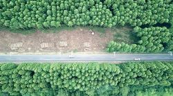 전국에서 가장 아름다운 '비자림로'의 삼나무들이 잘려나간 흔적들