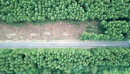 전국에서 가장 아름다운 '비자림로'의 삼나무들이 잘려나간