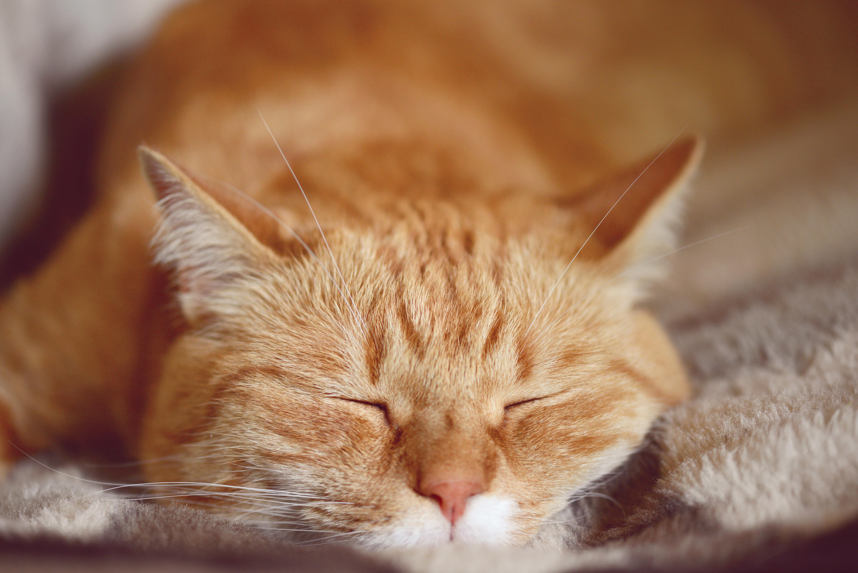 Mutter will sich bei den Nachbarn orangene Katze leihen – für ein besonderes