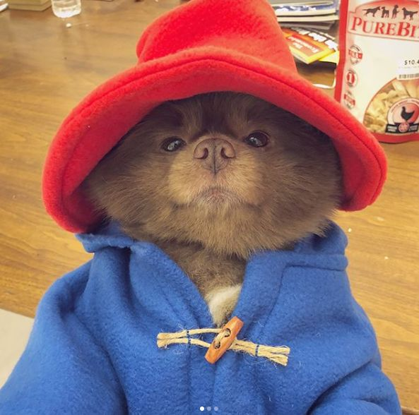 5 Cute Animals To End The Week: Paddington Dog And A Peach-Loving