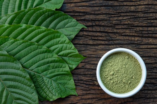 Mitragynina speciosa leaves and raw kratom powder on a table. Although some officials say kratom can...
