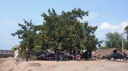 Warum Pakistan in nur 3 Jahren 1 Milliarde Bäume gepflanzt