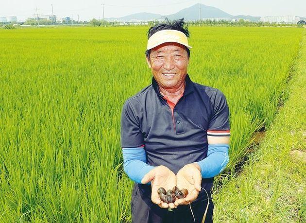 86만평 '서울 평야'에서 해마다 서울 쌀 1400톤이