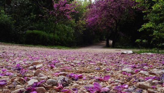 Εθνικός Κήπος και Πεδίον του Άρεως: Οι αντίθετοι δρόμοι των δύο μεγαλύτερων πάρκων της