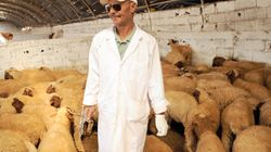 Aïd Al Adha: Le ministère de l'Agriculture réagit aux accusations du parti marocain