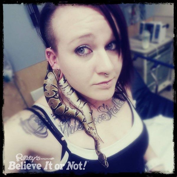 In January 2017, Ashley Glawe, of Portland, Oregon, got her pet snake caught in her gauged earlobe. The curious critter slith