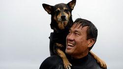 무더위를 씻어줄 '강아지 서핑 세계 선수권 대회' 현장