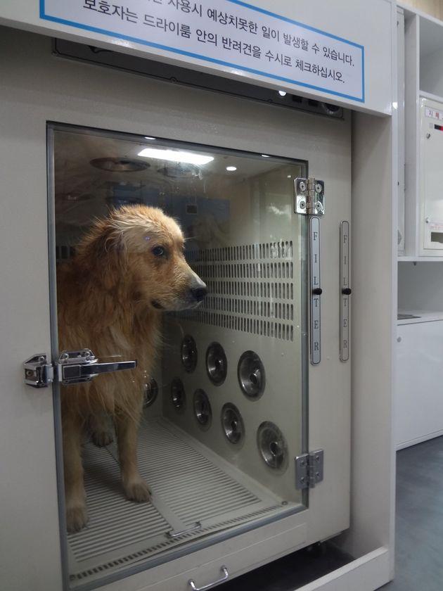 '시원하개' 빨래방 가듯 개 목욕방에