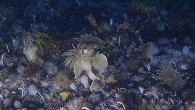 지난 1월 그린피스 잠수함 안에서 본 남극 해저의