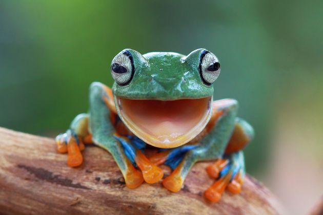 개구리를 끓는 물에 넣으면 정말 뛰쳐나올까? '냄비속 개구리'의