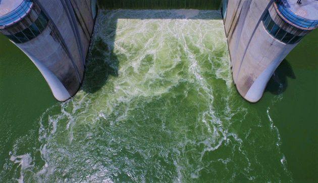 조류경보 '경계' 단계가 발령된 낙동강 창녕함안보. 녹조 현상으로 시퍼렇게 물든 강물이 수문을 넘어 흘러가고