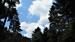 Το δάσος και η