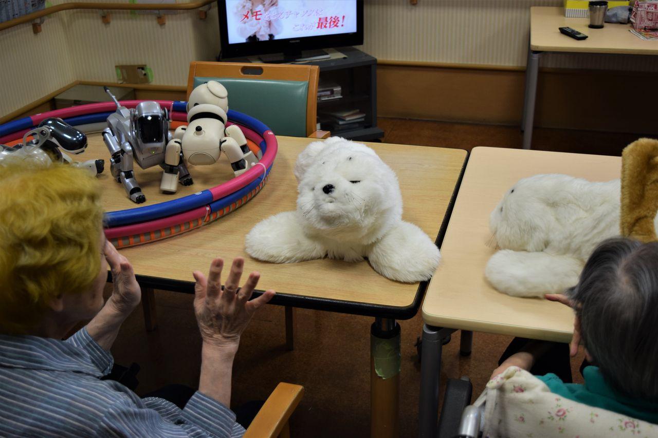 Hiyasu Uraki talks to Paro, the robotic seal.