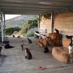 «Έσπασαν» τα τηλέφωνα για να δουλέψουν με 55 γάτες στη