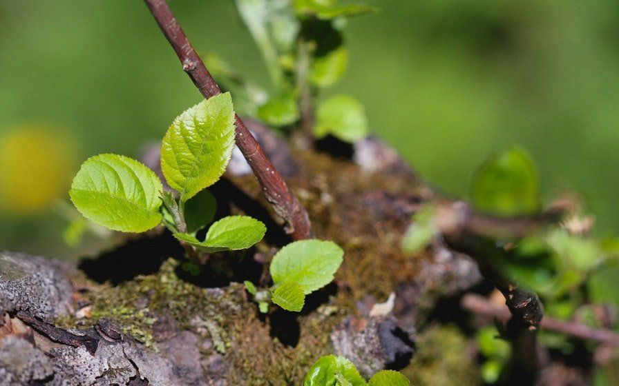 Selbst die Vorfreude auf Bäume, Wiesen und Flussufer senkt den Stresspegel