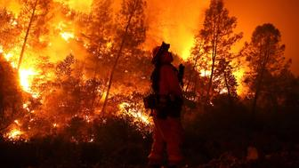 LODOGA, CA - AUGUST 07:  A firefighter monitors a back fire while battling the Medocino Complex fire on August 7, 2018 near Lodoga, California. The Mendocino Complex Fire, which is made up of the River Fire and Ranch Fire, has surpassed the Thomas Fire to become the largest wilfire in California state history with over 280,000 acres charred and at least 75 homes destroyed.  (Photo by Justin Sullivan/Getty Images)