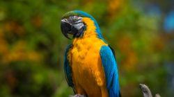 Feuerwehr will Papagei retten – sie hat nicht mit der Reaktion des Tieres