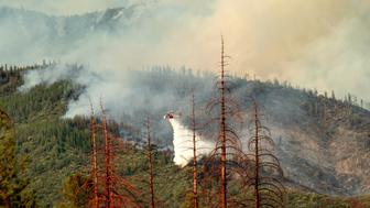 Dead trees line a clearing as a helicopter battling the Ferguson fire passes behind in the Stanislaus National Forest, California, on July 22, 2018. - An abundance of trees killed by drought and bark beetles has allowed forest fires to spread rapidly. A fire that claimed the life of one firefighter and injured two others near California's Yosemite national park has almost doubled in size in three days, authorities said Friday. The US Department of Agriculture (USDA) said the so-called Ferguson fire had spread to an area of 22,892 acres (92.6 square kilometers), and is so far only 7 percent contained. (Photo by NOAH BERGER / AFP)        (Photo credit should read NOAH BERGER/AFP/Getty Images)