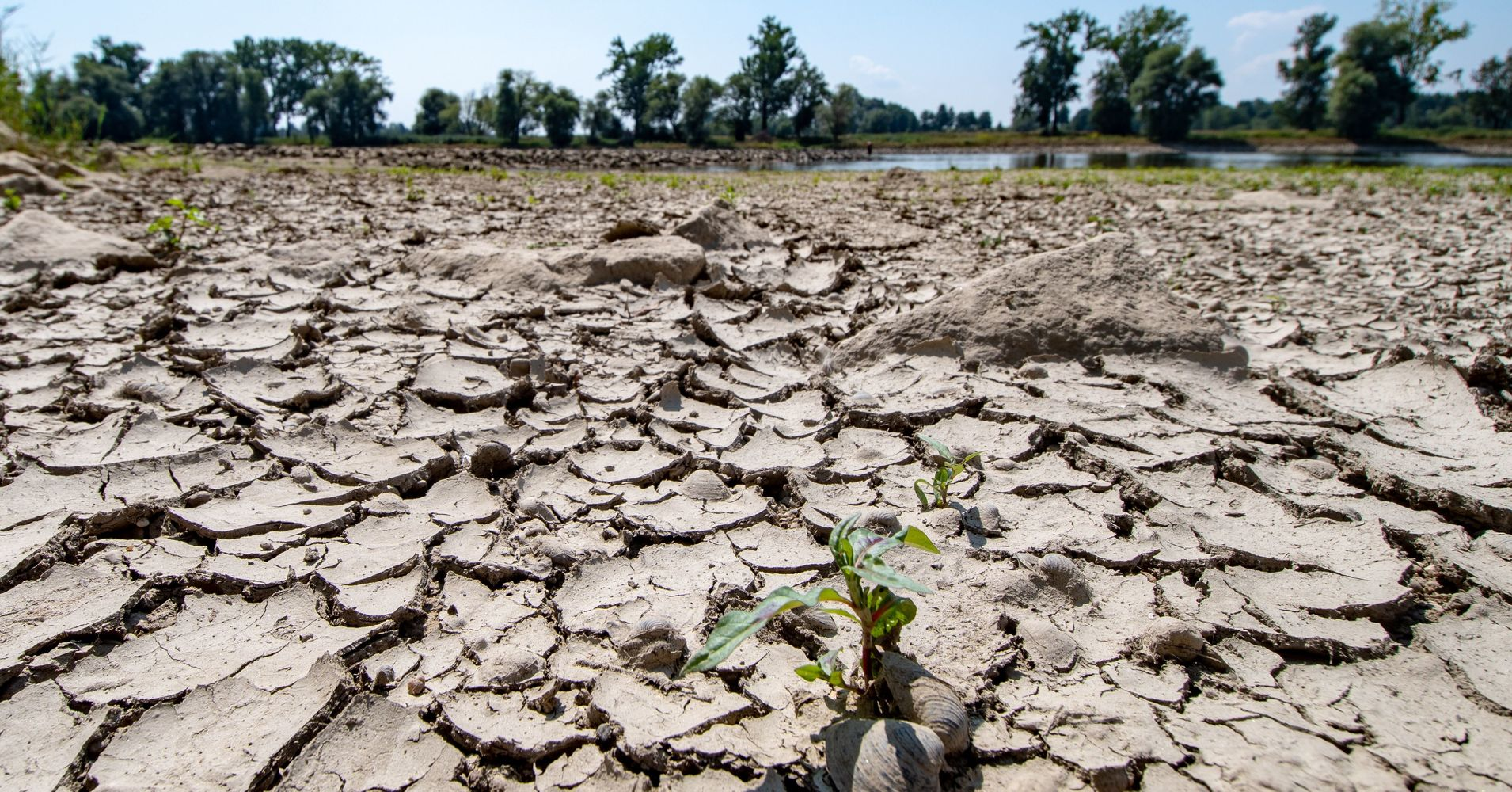 record breaking drought scientists agree - HD4626×3084