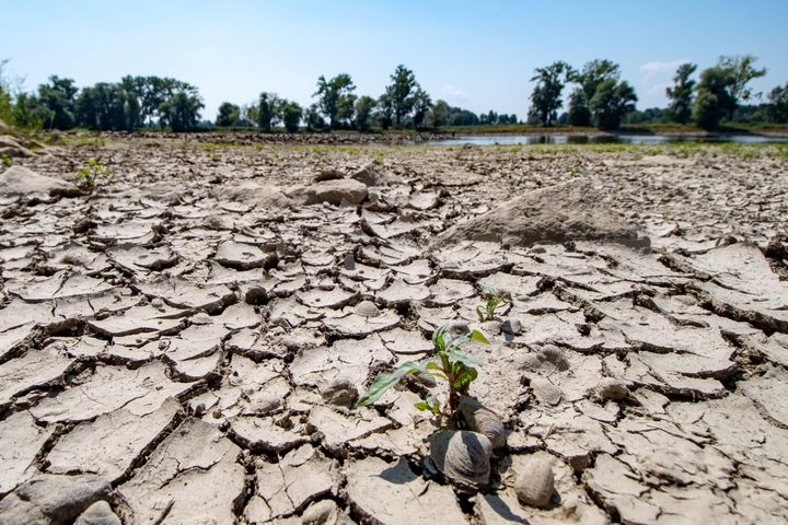 Germany, and many other nations inEurope,suffered several weeks of debilitating heat and droughtthis summer