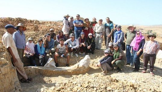 Les ossements du Stegodon d'Ain El H'nech exposés à la presse à