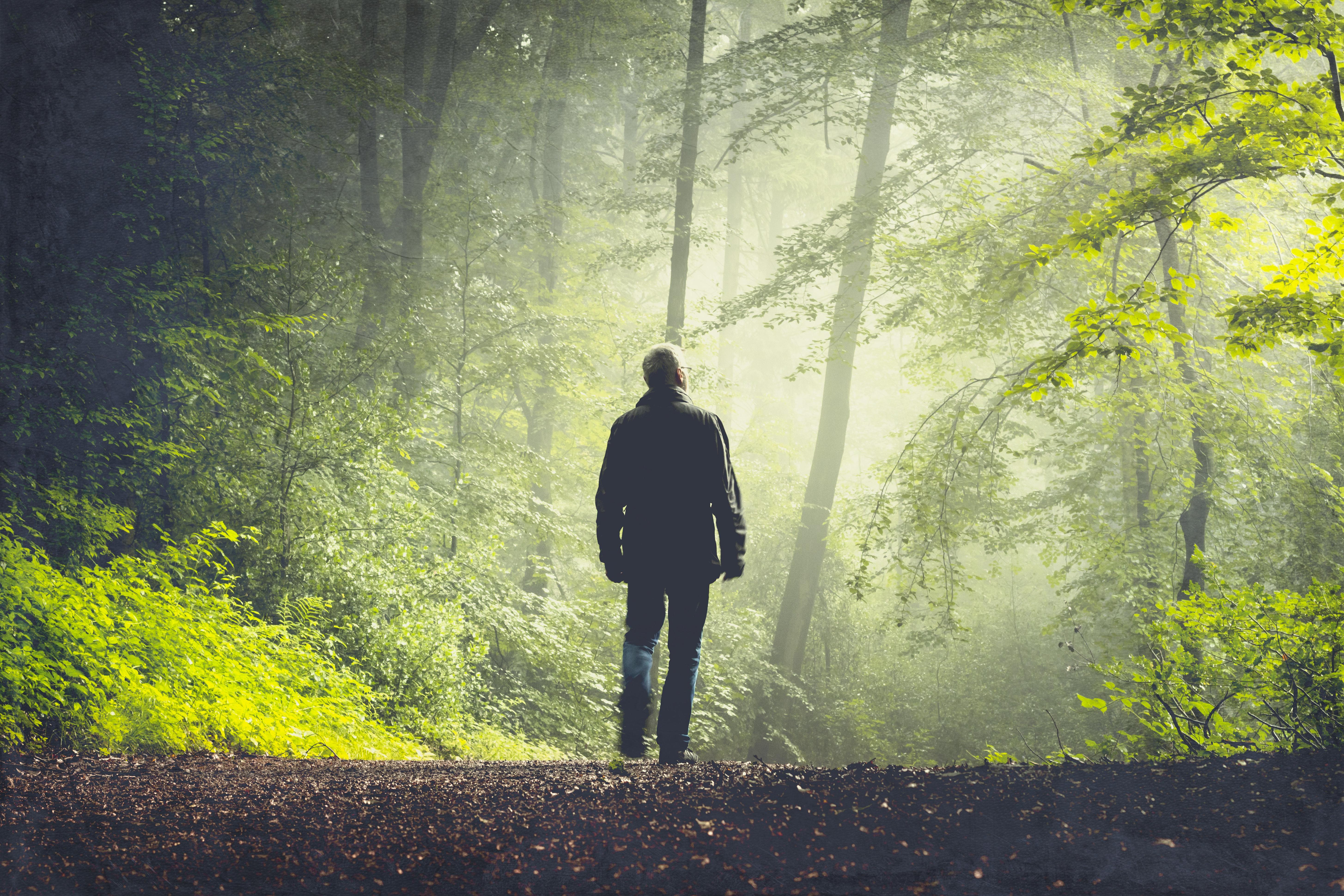 Schon nach kurzer Zeit habe ich das Gefühl, dass mich der Wald