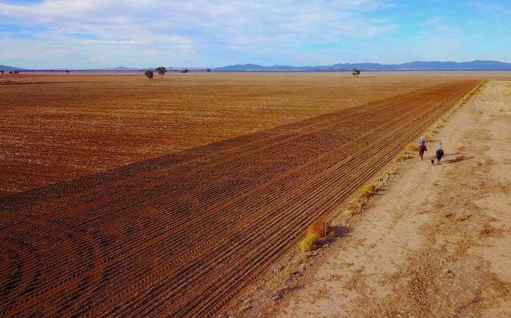 This farmland in central New South Wales is usually home to wheat crops.
