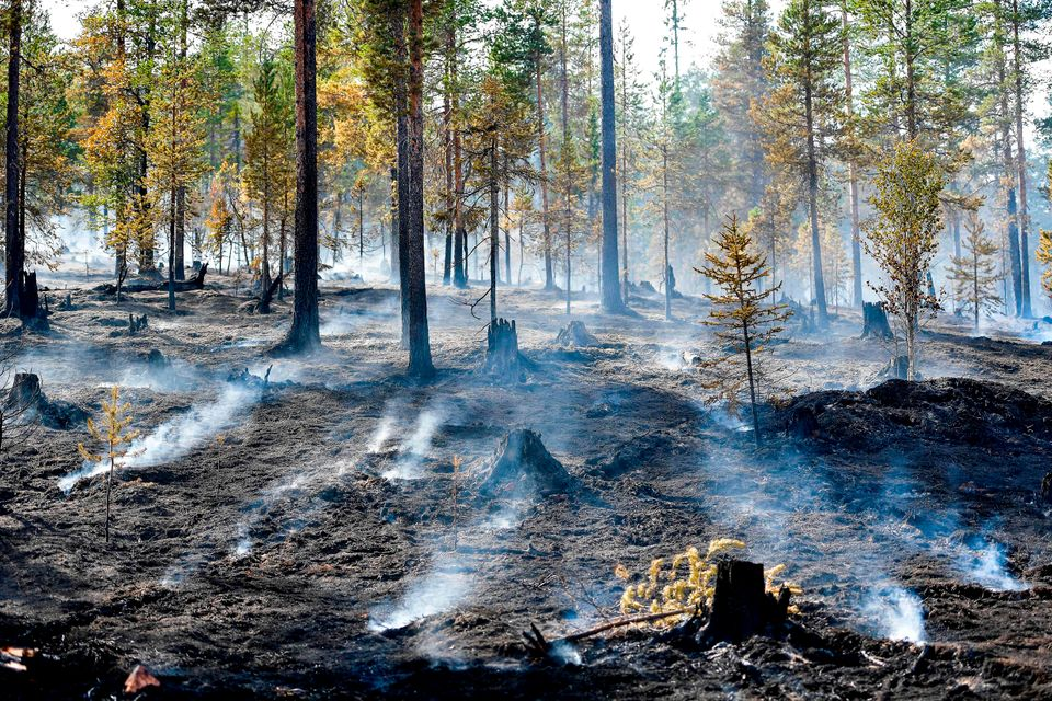 A forest fire burns out in central