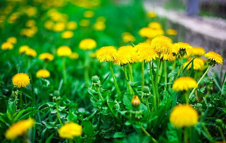 The woman's family has said that she was cutting dandelions for a salad when police used a Taser on her.