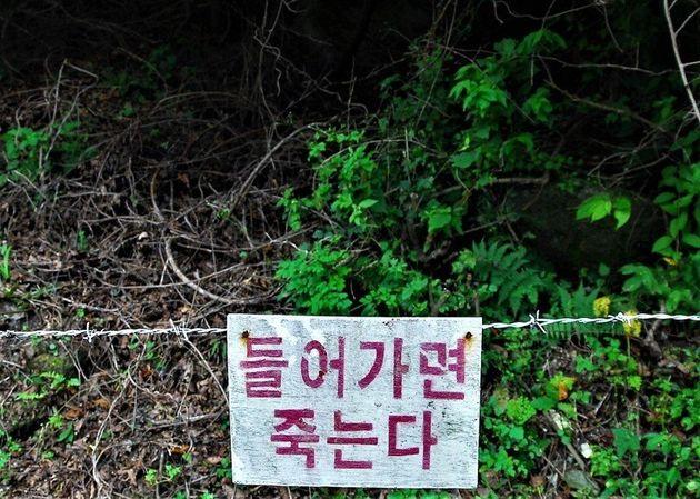 경기도 파주의 지오피 철책선 순찰로 옆에 설치된 대인지뢰