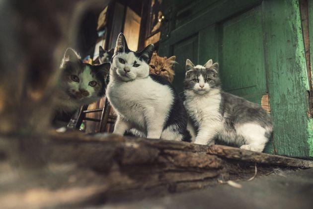 8년간 약 1천마리의 고양이를 죽인 사람이