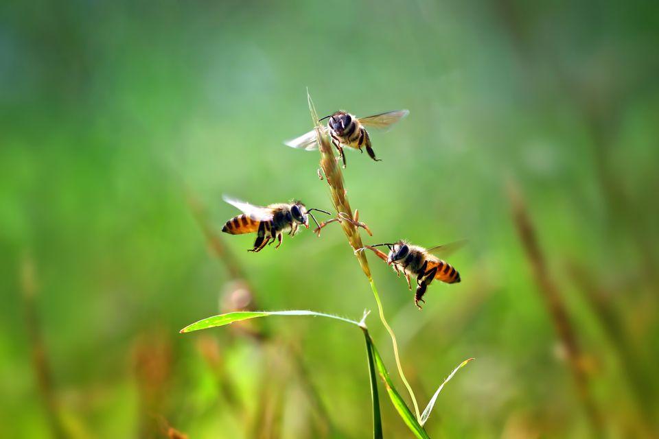 Bienensterben: Umweltschützer warnen vor Folgen – Forscher erklären, wie es wirklich