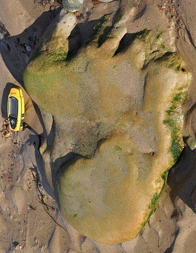 The 170 million-year-old prints were found on the Scottish mainland near