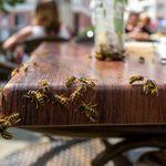 Wieso Wespen diesen Sommer besonders gefährlich