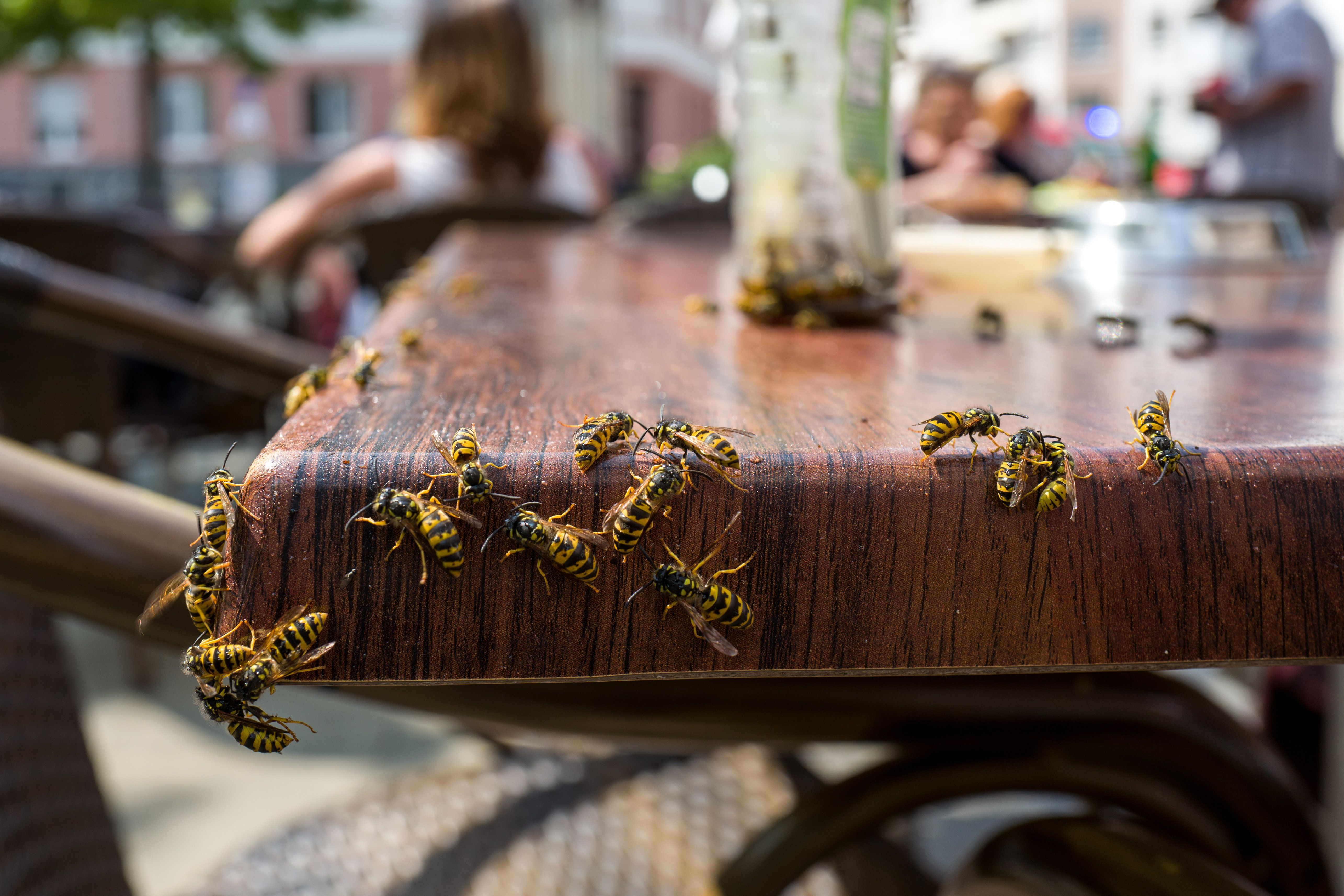 Don't Panic, But The Heatwave Is Making Wasps Live Longer (And Their Queens Are Thriving)