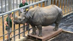 A Rhino, 2 Meerkats And A Turtle... No It's Not A Joke, It's The Annual Whipsnade Zoo Animal