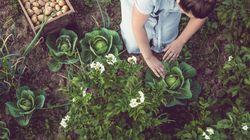 Wie wir mit einer pflanzlichen Ernährung unseren Planeten schützen