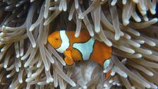 Masse Bleichen Trifft Great Barrier Reef Wieder: Beobachten, Wie Louvre Brennen Auf Den Boden
