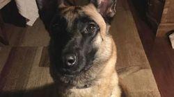 Η ΕΛ.ΑΣ. αποχαιρετά την «Anuk», το «μάχιμο» σκυλί της περίφημης Ομάδας