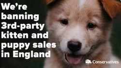 Η Βρετανία απαγορεύει την πώληση σκυλιών και γατιών από τα Pet