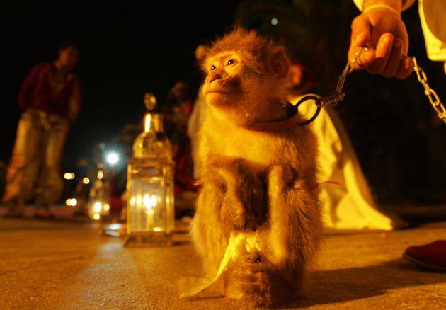 Une étude alerte sur les mauvaises conditions de vie des animaux en captivité au