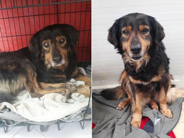 Hund Fredy sucht ein neues Zuhause. Er hat einen tollen Charakter, geht wunderbar mit Menschen um und...