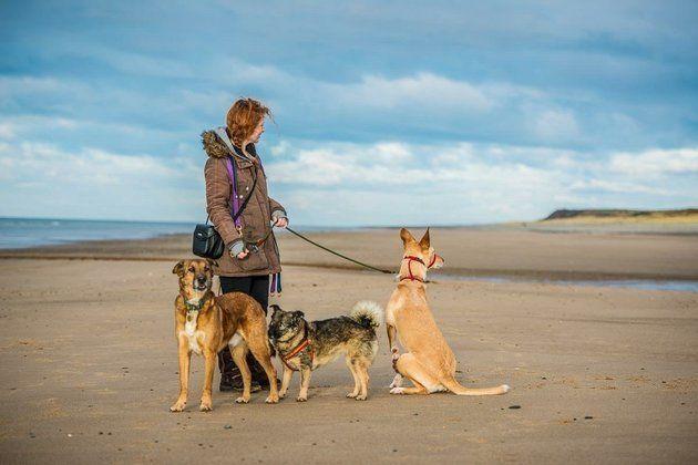Die Gründerin der Hunde-Hilfsorganisation Katy Orton mit ihren
