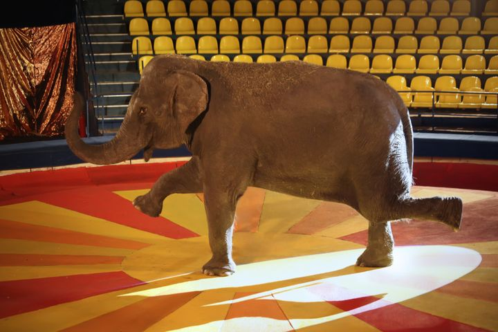 """I wish it hadn't taken me a year to understand that no wild animal belongs in a circus or that animal sanctuaries are"