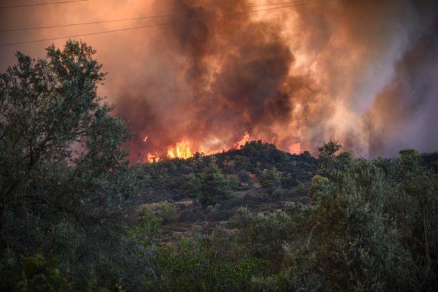 Forêts : plus de 43 hectares parcourus par le feu en une