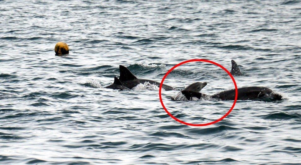 수족관에서 우울증 성향 보였던 남방큰돌고래의 아주 반가운 근황