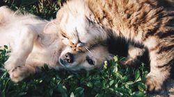Wie können Hunde & Katzenbesitzer clever Geld sparen