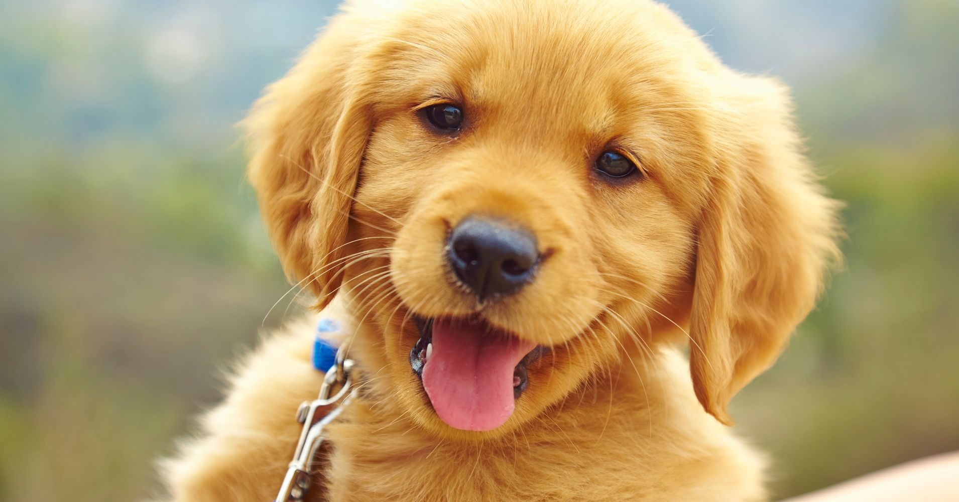 The Ridiculously Cute Dog Challenge To Distract You From All Doom And Gloom