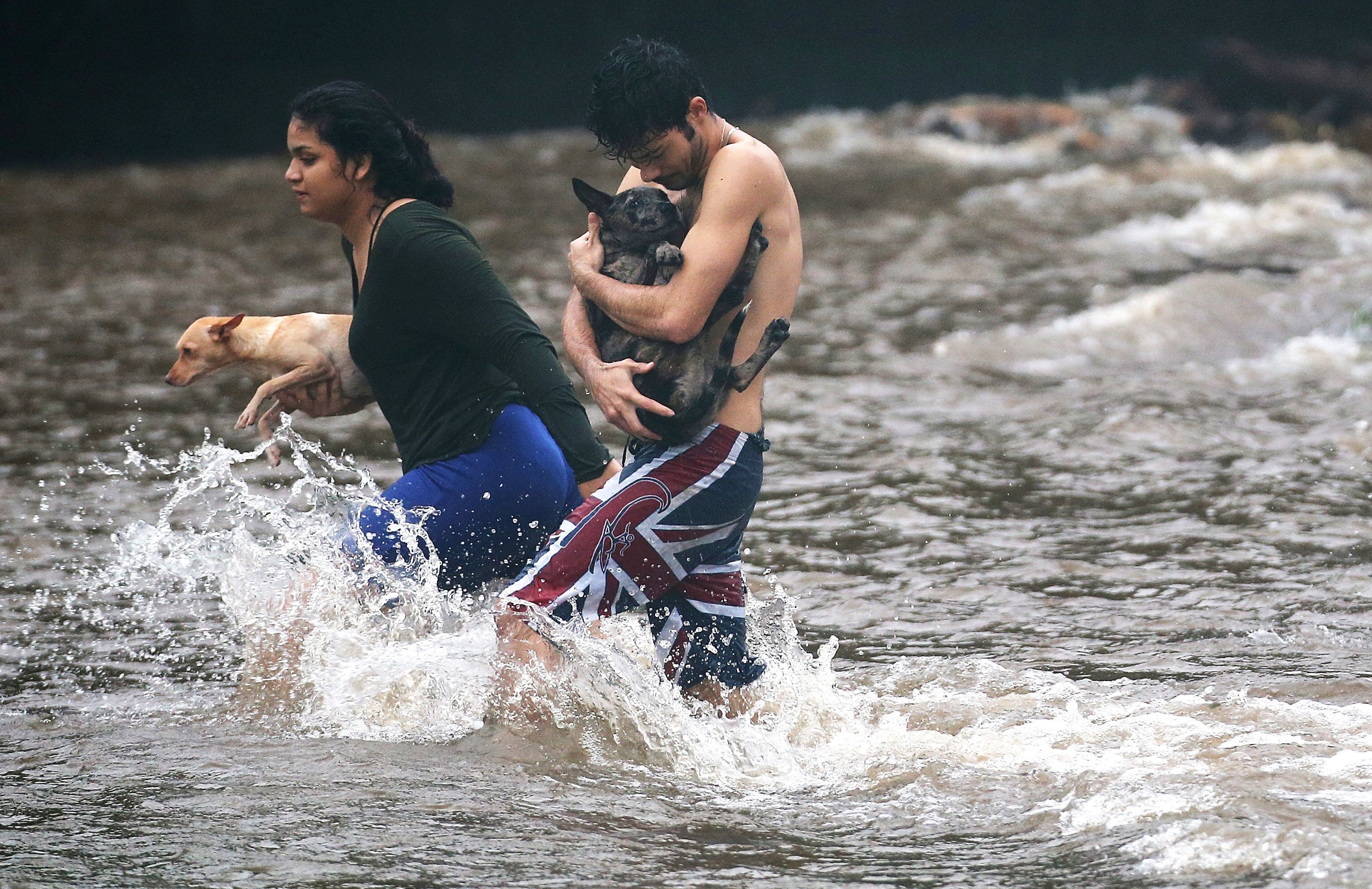 HILO, HI - AUGUST 23:  Residents carry dogs through flood waters to dry land, after playing in the water briefly on the Big Island on August 23, 2018 in Hilo, Hawaii. Hurricane Lane has brought more than a foot of rainfall to some parts of the Big Island which is under a flash flood warning.  (Photo by Mario Tama/Getty Images)